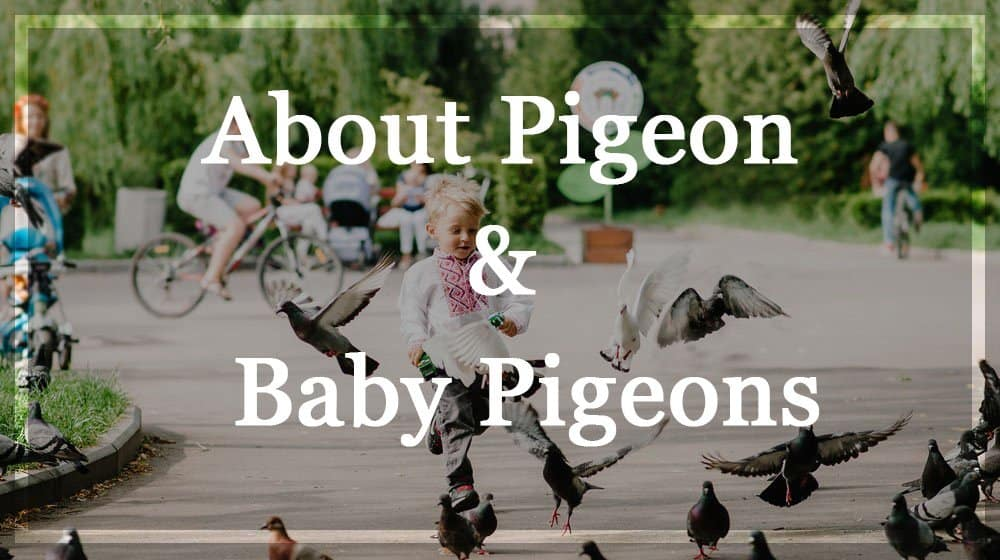 Un bebé está jugando con palomas en una plaza