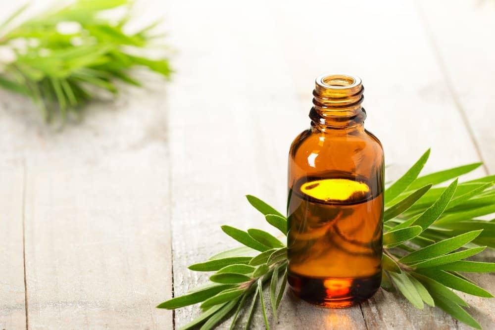 Aceite esencial de árbol de té y hojas