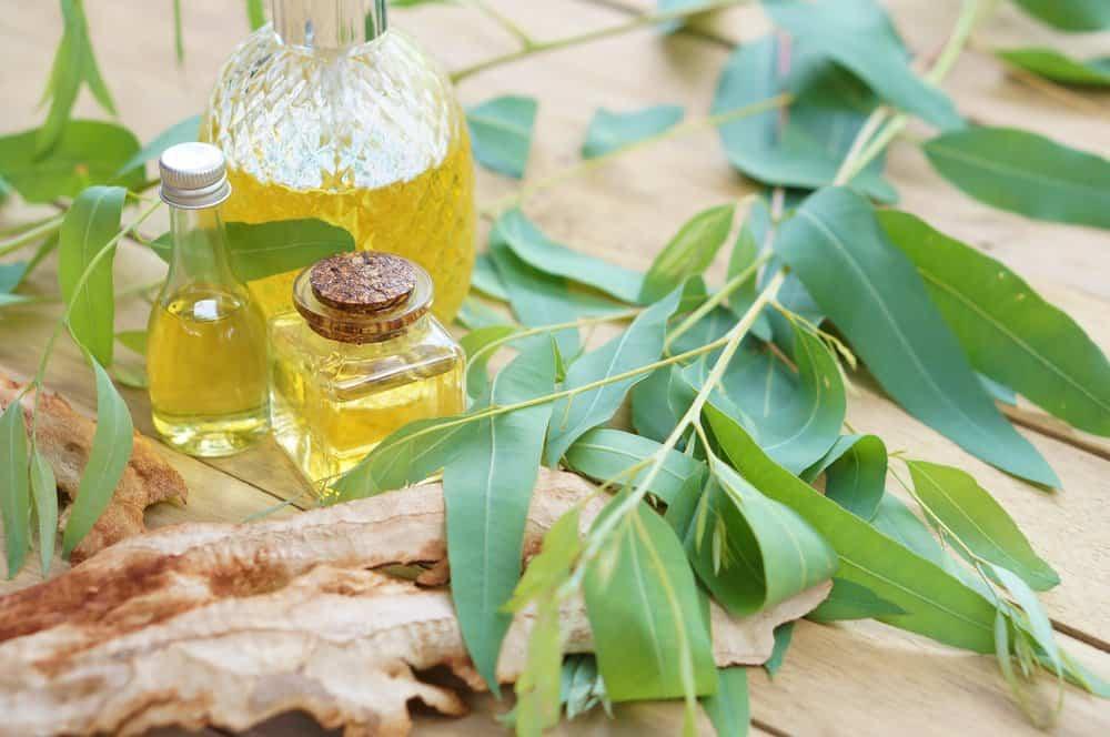 Aceite esencial de eucalipto y hojas verdes