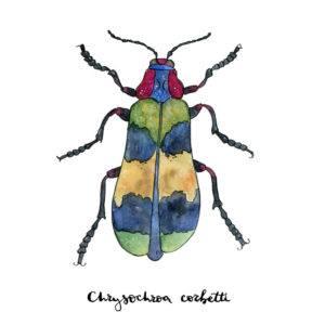 Esbozo de escarabajo pintado a mano en acuarela