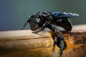 Agujero de la abeja de carpintero