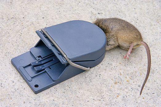Ajustar trampa con un ratón