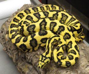Alfombra de descanso serpiente Python