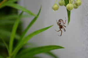 Trampas de Araña: 9 Trampas de Araña más Vendidas y cómo Usarlos