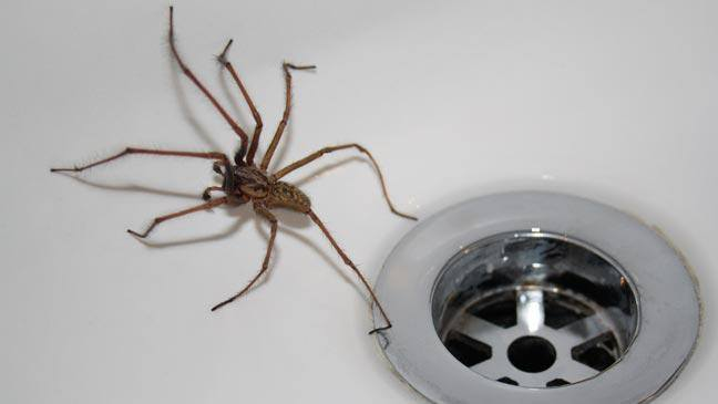 Cómo Deshacerse de las Arañas en la Casa en 3 Sencillos Pasos