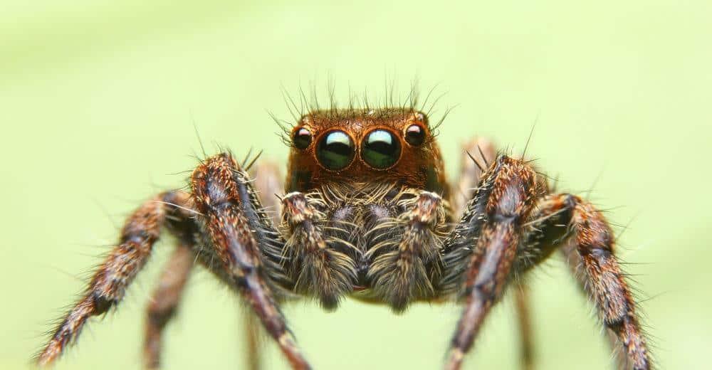 Arañas 101: Increíbles Hechos, Especies Comunes y Prevención