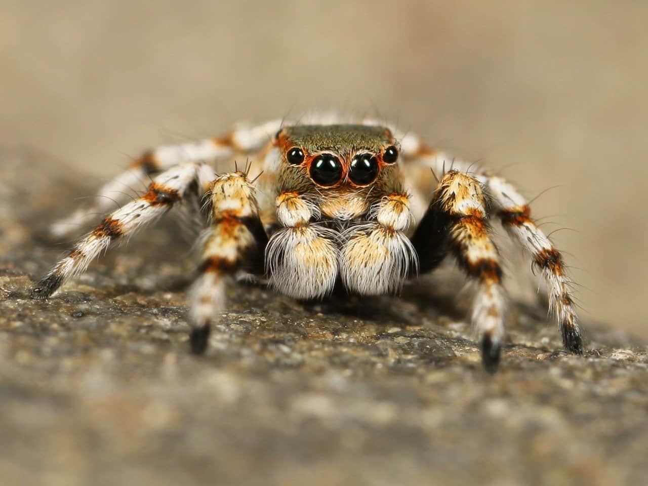 Los Mejores 8 Productos de Araña Asesino Vale la Pena Comprar
