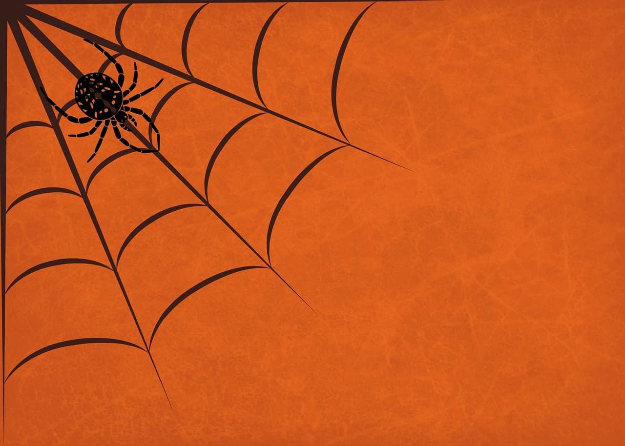 Datos Sobre los Diferentes Tipos de Arañas