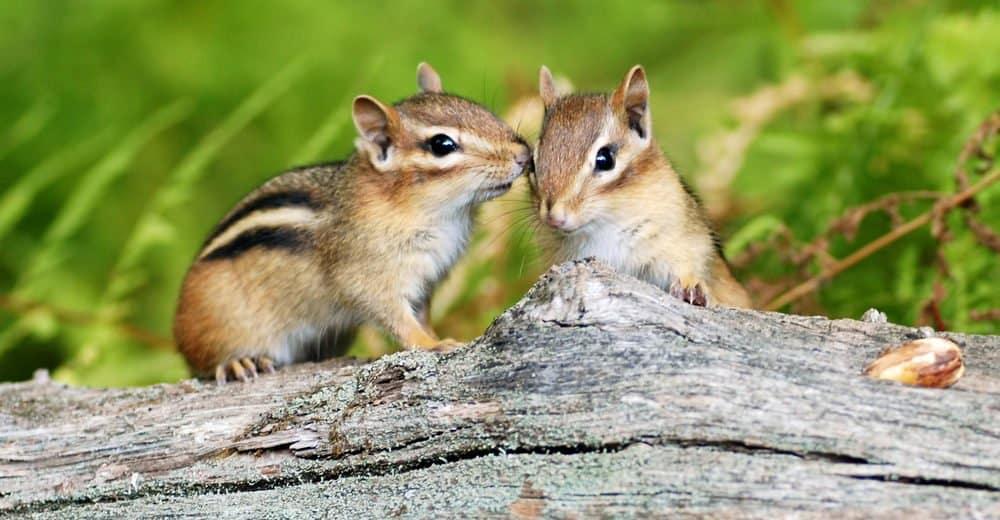 Ardillas: Hechos Animales Peludos Lindos (otros 15 Hechos Divertidos que puede no Saber)