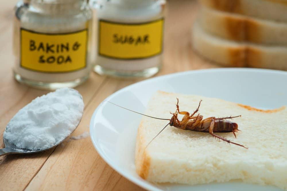 Bicarbonato de soda en polvo y una cucaracha muerta tumbada en un brindis