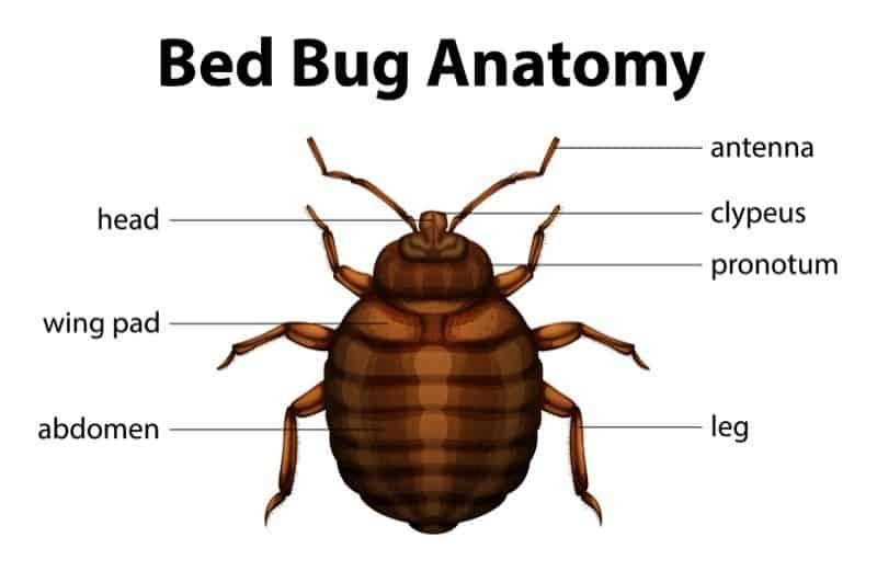 Información detallada sobre el problema de la cama