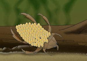 Insecto de agua de dibujos animados en el bosque