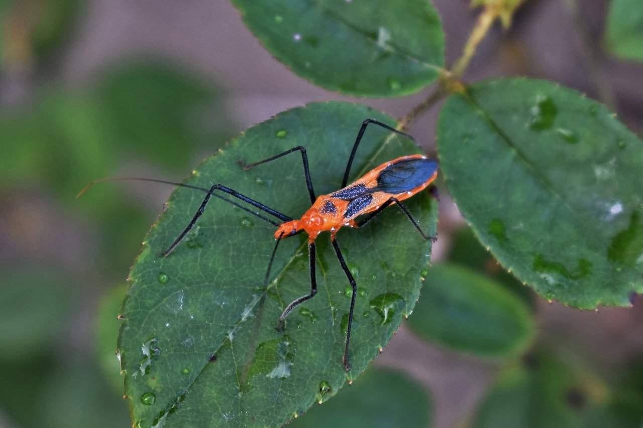 Todos los hechos de Insectos Asesinos que Necesitas Saber