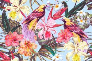 Aves — ¿Por qué las Aves son Tan Aagresivas