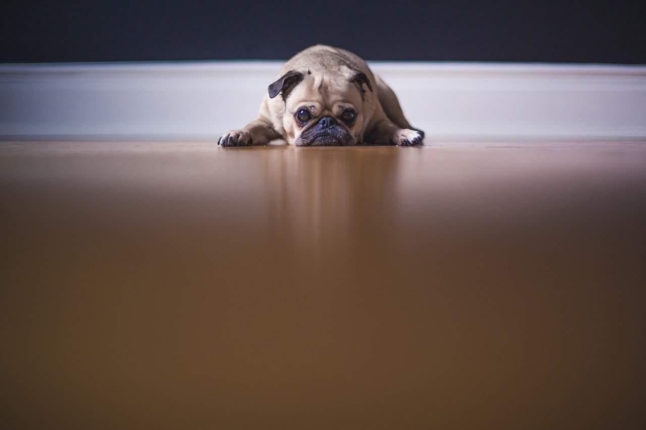 El Mejor Repelente de Perros 7, Mantiene tus Propiedades a Salvo de los Perros
