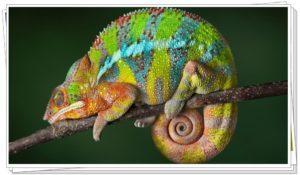 Camaleón en la naturaleza