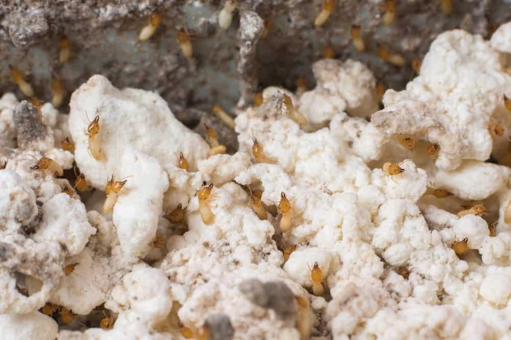¿Cómo Hacer una Trampa de Hormigas en Casa?
