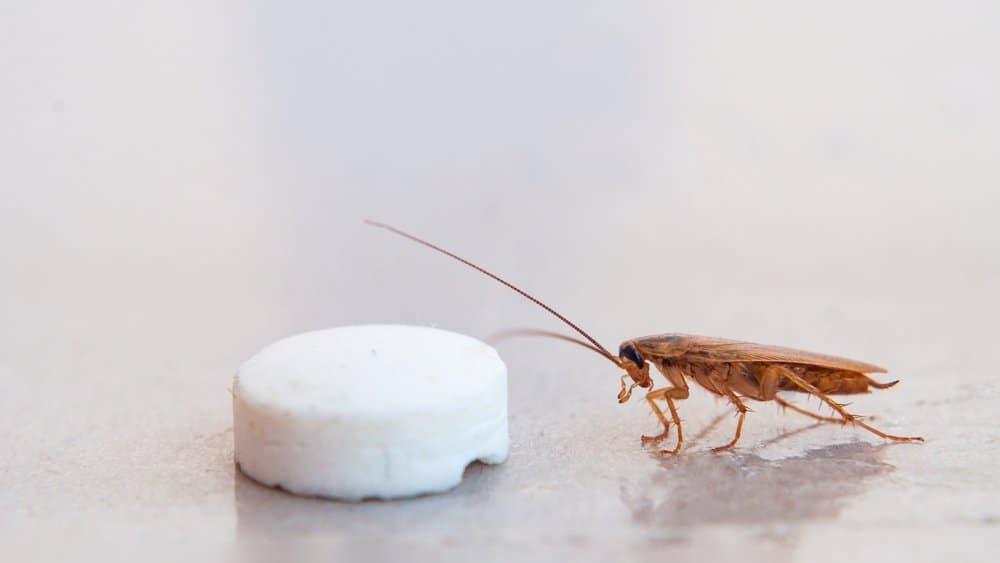 Uso de cubo de azúcar para atrapar cucarachas