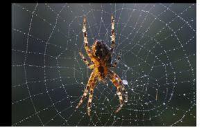Cerrar la web de araña