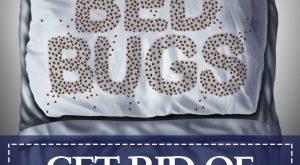 Letras de insecto de cama grande escritas en sábanas de cama