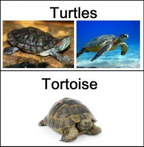 Tortugas VS Tortugas Marinas — 5 Diferencias y Comparaciones