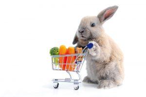 18 Fascinantes Hechos de Conejos Que Te Sorprenden