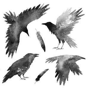 Conjunto con cuervos negros y plumas sobre fondo blanco