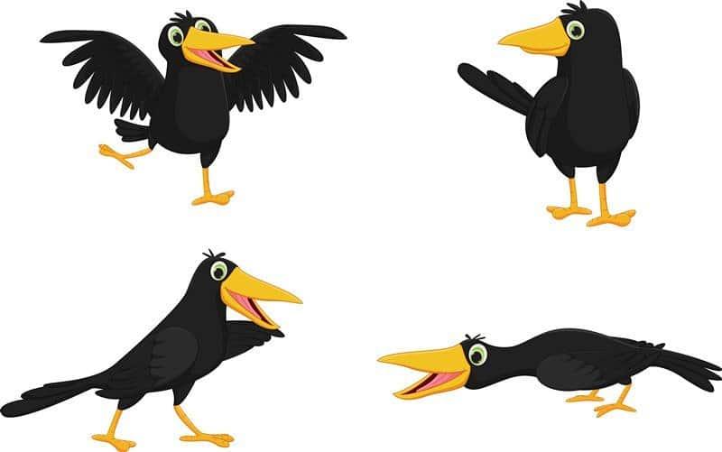 Cuervo: 17 Increíbles Hechos de Cuervo y Daños que Te Ayudan a Conocerlos Bien