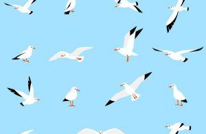 Gaviota: Guía Completa para Aprender Sobre Ellos (13 Hechos Asombrosos)