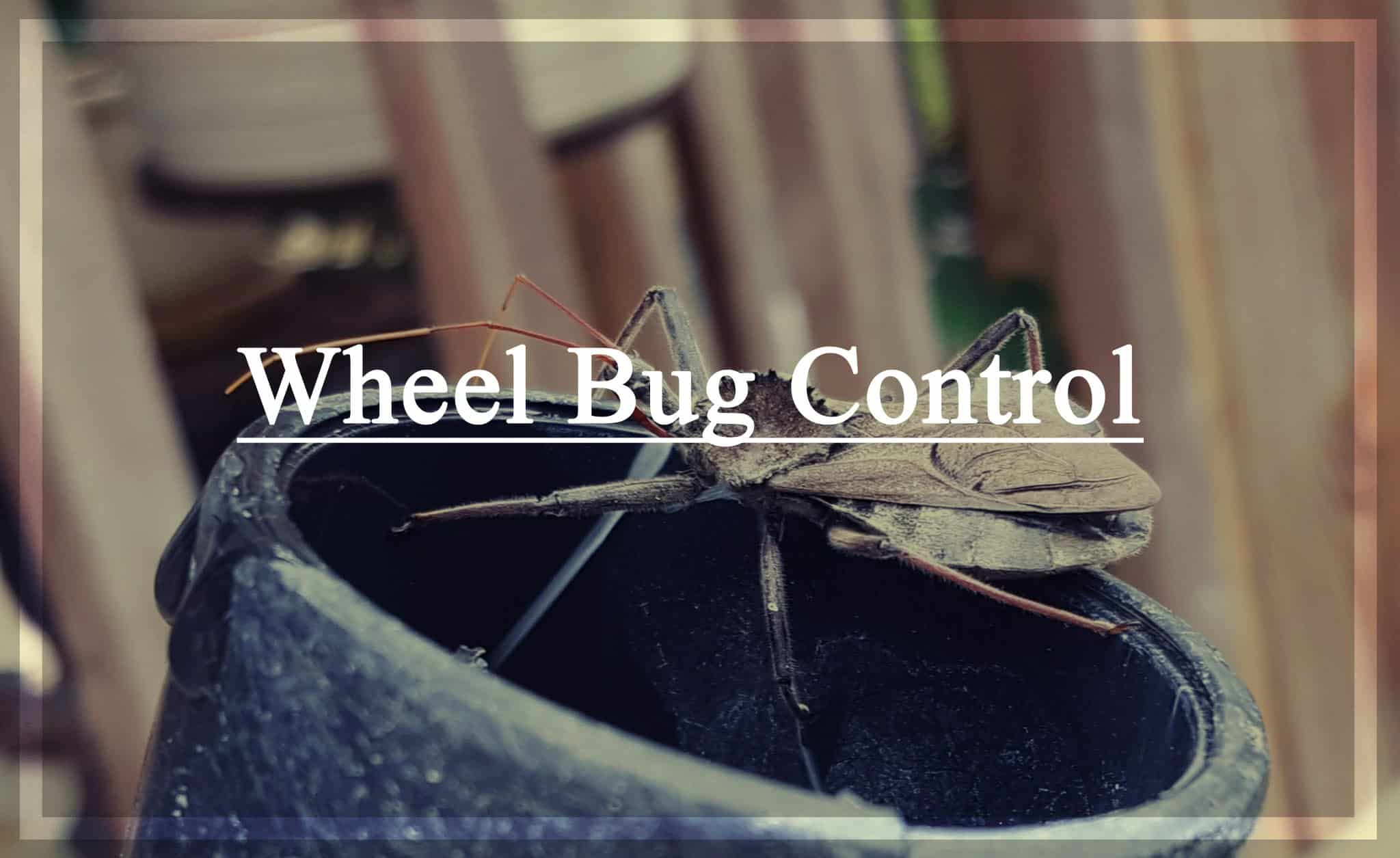 Control de Insectos en las Ruedas – Tratamiento de Picaduras y Remedios Caseros
