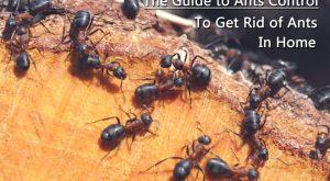 Grupo de hormigas