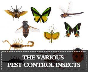 Insectos de Control de Plagas — Listado de los Varios Insectos de Control de Plagas
