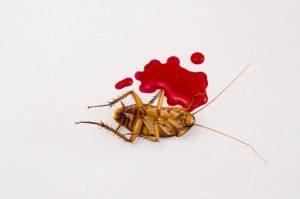 Una cucarachas muertas con sangre en el suelo