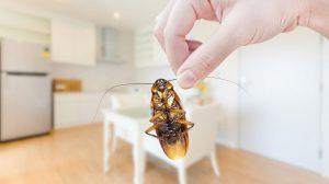 Súper 9 Insectos Consejos de Control que Realmente Funciona