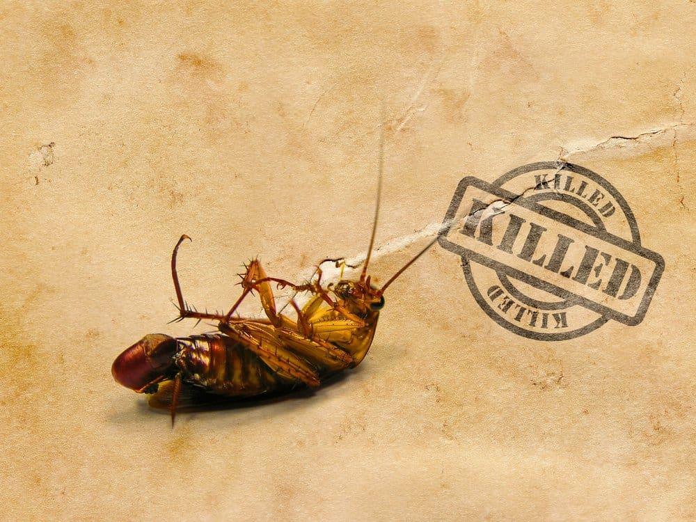 Una cucaracha muerta en el suelo