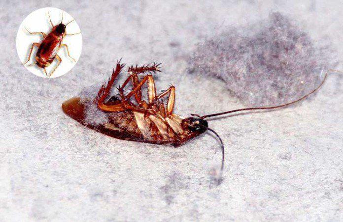 Cómo Deshacerse de las Cucarachas Rápidamente: La Guía Completa