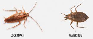 Identidad de la cucaracha y el bicho de agua