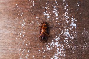 Cucarachas – Cómo Matar Cucarachas con Borax (2018)