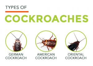 Diferentes tipos de cucarachas en el fondo blanco