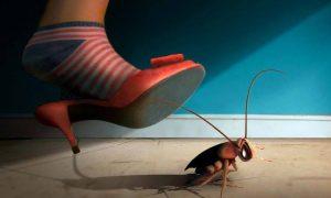 5 Formas de Deshacerse de las Cucarachas de Forma Natural (en Casa, Apartamento o Coche)