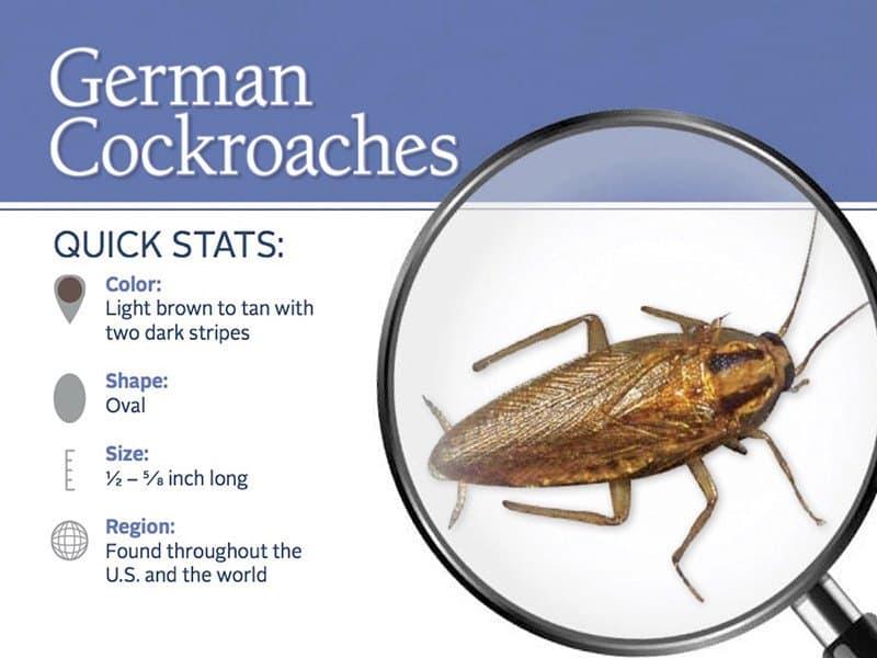 4 Métodos de Asesino para Despojar de Cucarachas Alemanas: ¿Qué Cucarachas Comerciales Funcionan Mejor 2018?