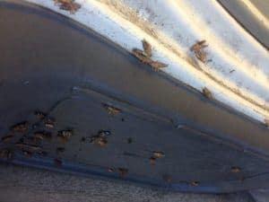 Montones de cucarachas en el aprietamiento