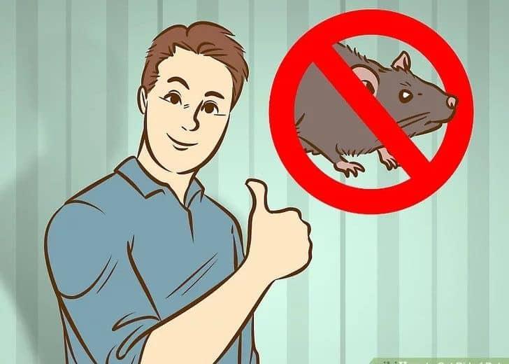14 Remedios Domésticos para Deshacerse de Ratas