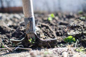 Deseche las plantas en descomposición con una pala.