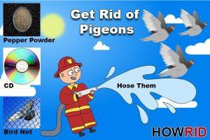 Despojarse de las Palomas: 14 Soluciones para el Hogar y Cuatro Medidas de Precaución