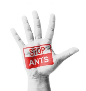 Mano abierta levantada, con el cartel Stop Ants pintado