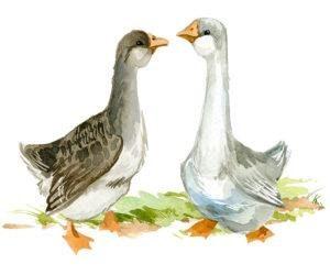 Dos gansos