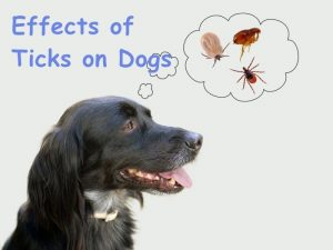 ¿Cuáles son los Efectos de las Garrapatas en los Perros?