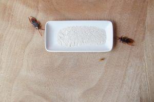 Dos cucarachas en el suelo