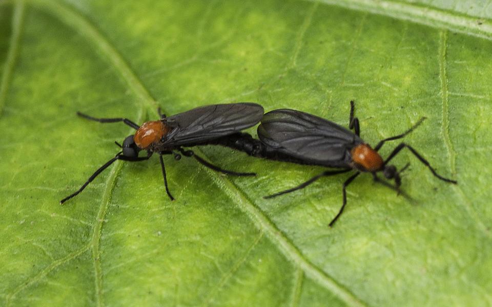 Dos insectos de amor tumbados en una hoja